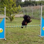 Kenders's Cocker - Addestramento per Agility Dog
