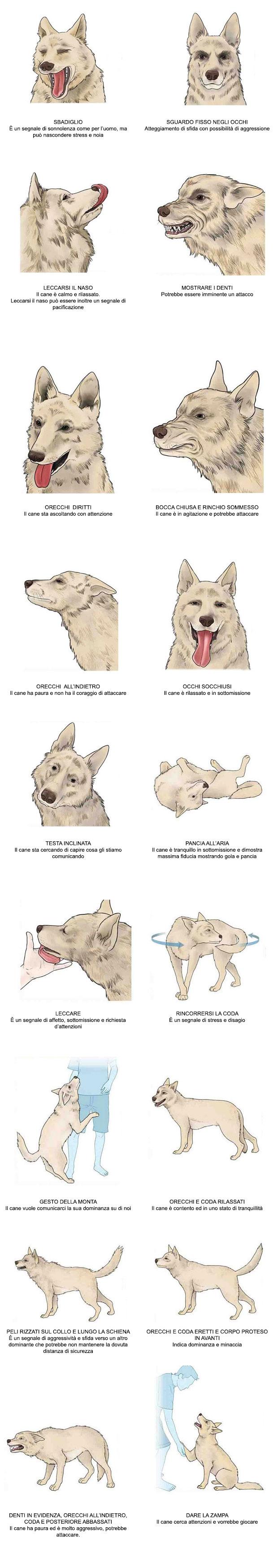 il-inguaggio-del-cane