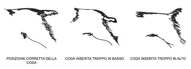 la-coda-del-cane